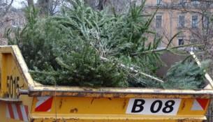 container weihnachtsbaum