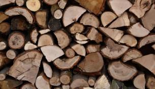 Holzeinschlag im Albertpark