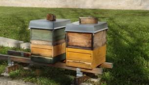 Hygienemuseum Bienenstöcke