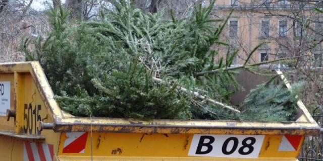 Tannenbaum Wegwerfen.Weihnachtsbaum Kostenlos Entsorgen 105 Zusätzliche Sammelstellen
