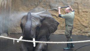 elefantendusche